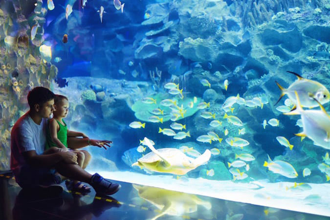 father and son looking at a large fish tank in an aquarium